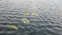 Skaityti daugiau: Žolynais apipintos Joninės